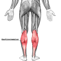 腓腹筋の鍛え方。効果的な筋トレメニューを徹底解説