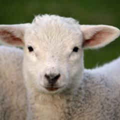 大門 羊子