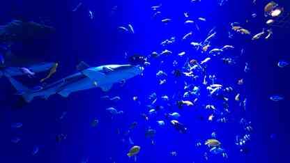 日帰りに最適!思い立ったらすぐに行ける東京都内のおすすめ水族館
